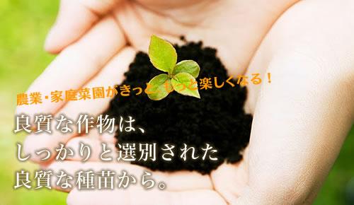 良質な作物はしっかりと選別された良質な種苗から